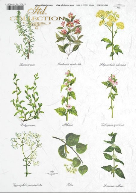 kitchen, spices, herbs, herbs, herbarium, mint, nettle, rosemary, R401