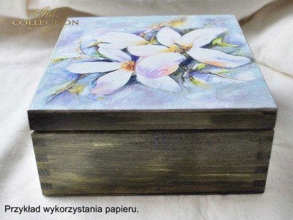 magnolia, magnolias, flower, flowers, Magdalena Rochoń - example 01