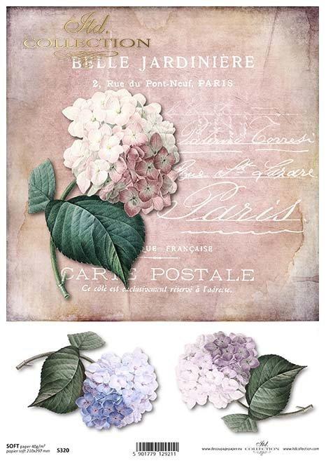 Papier decoupage Hydrangea*Papír decoupage Hydrangea*Hortensia papel decoupage