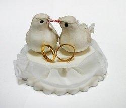 Dwa gołębie na tiulu z obrączkami