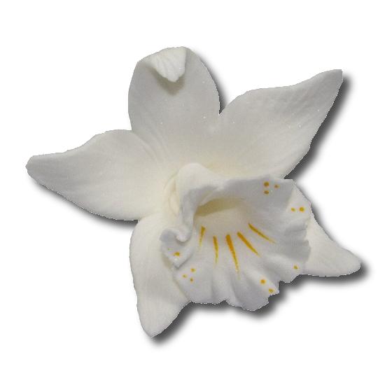Katleja biała malowana - 10 szt