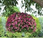 Jak wyeksponować rośliny w ogrodzie?