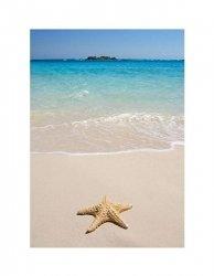 Rozgwiazda na plaży - reprodukcja