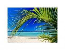 plage et palmier - reprodukcja