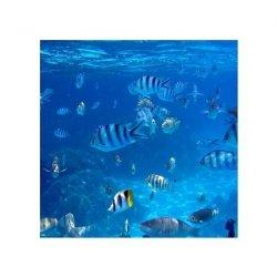 Troplikalne Ryby - reprodukcja