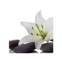 Lilia na Kamieniu Spa - reprodukcja