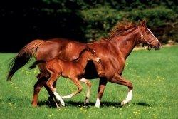 Koń i Źrebak - plakat