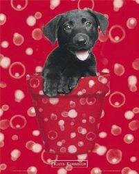 Psy - Czarny Labrador - plakat