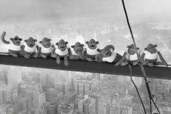 Małpki na belce - plakat