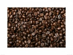 Świeże Ziarna Kawy V - reprodukcja