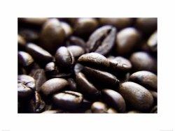 coffe bean - reprodukcja