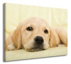 Golden retriever puppy - Obraz na płótnie