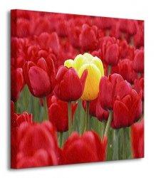 Żółty tulipan - Obraz na płótnie