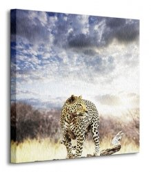 Leopard - Obraz na płótnie