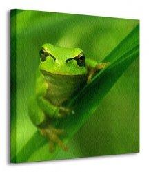 Zielona Żaba - Obraz na płótnie