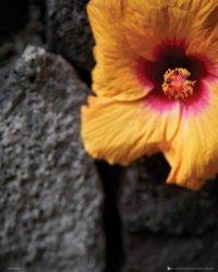 Pomarańczowy Kwiat Skała - plakat