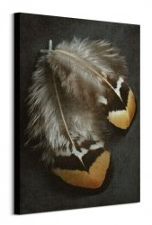Pheasant Feather Duo - obraz na płótnie