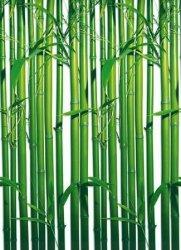 Fototapeta na ścianę - Bambusy - 183x254 cm
