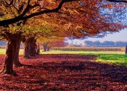 Fototapeta na ścianę - Kolorowy krajobraz - 254x183 cm