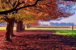 Fototapeta na ścianę - Kolorowy Krajobraz - 175x115 cm