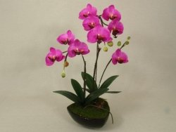 Sztuczny storczyk - Orchidea - W doniczce - 40x62cm - Amarantowy