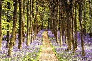 Woodland Path - plakat