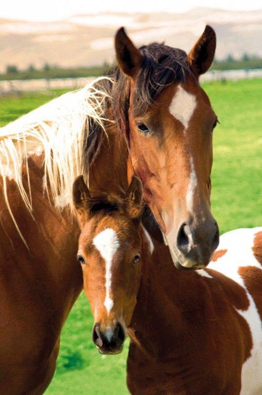 Konie - matka z dzieckiem - plakat