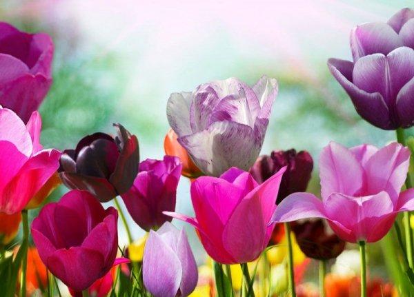 Fototapeta - Kolorowe Kwiaty - 320x230 cm