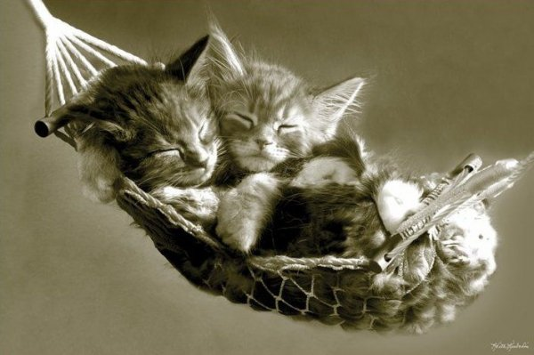 Kociaki w hamaku - plakat