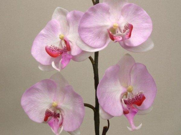 Sztuczne storczyki - Orchidea - W doniczce - Jasny róż - sklep internetowy decoart24.pl