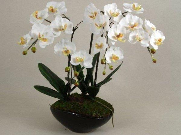 Sztuczny storczyk - Orchidea - W doniczce - 50x73cm - Decoart24.pl