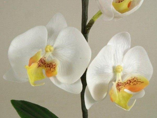 Sztuczny storczyk - Orchidea -  W kubku - 16x32cm